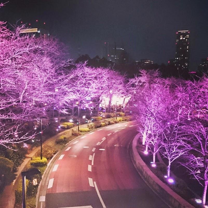 東京ミッドタウン・Midtown桜