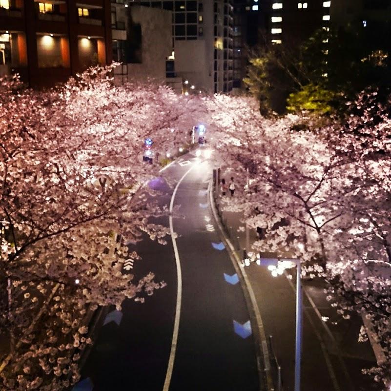 六本木ヒルズ、さくら坂の桜