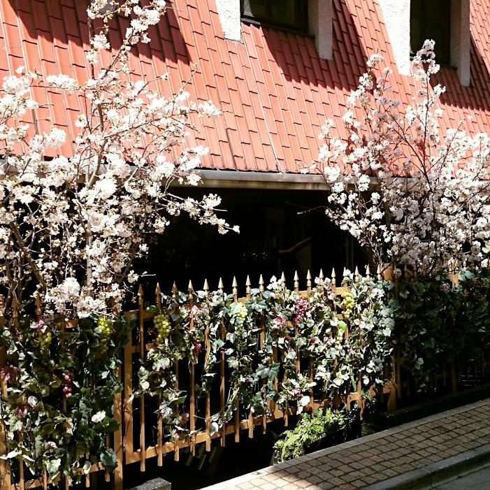 ワインBarビーノワールの春桜