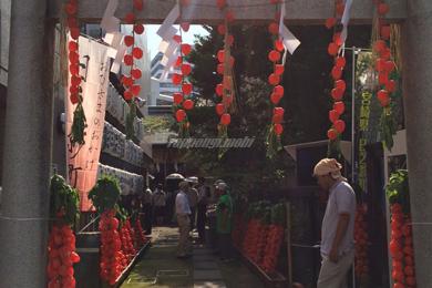 六本木 朝日神社 ほおずき市